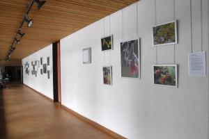 Ausstellung Foto&Duft im Heilbadzentrum St. Moritz